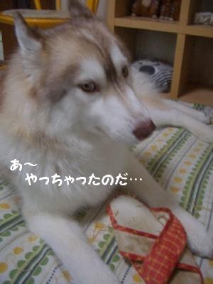 CIMG5166.jpg