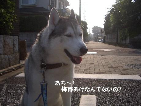 CIMG6365.jpg