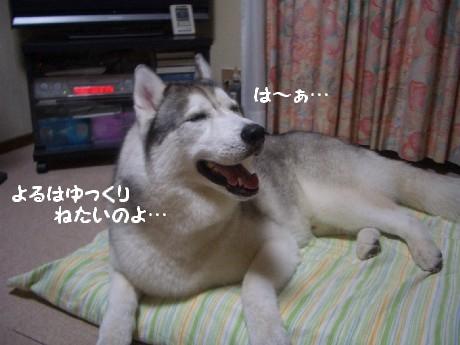 CIMG6687.jpg