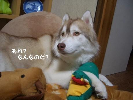 CIMG6702.jpg