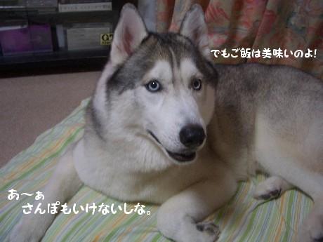 CIMG6707.jpg