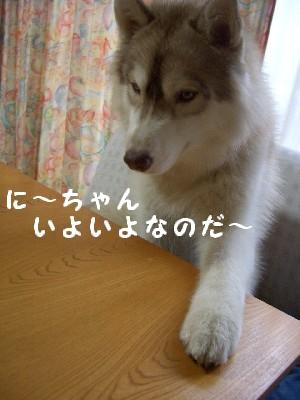 CIMG6809.jpg