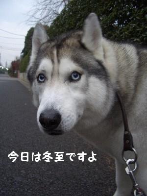 CIMG6937.jpg