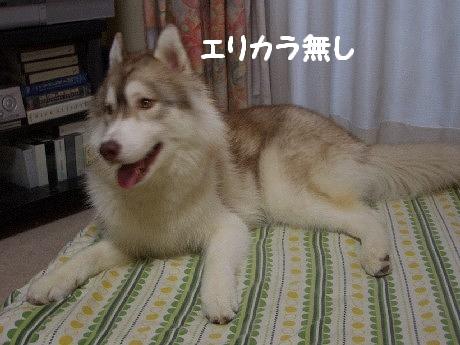 CIMG7959.jpg