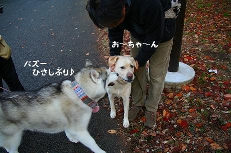 IMG_4119.jpg