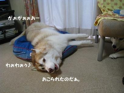 IMG_6209.jpg
