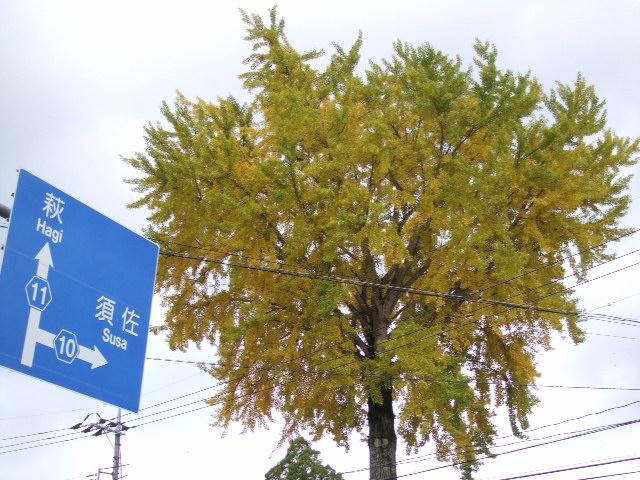2007_11120064.jpg