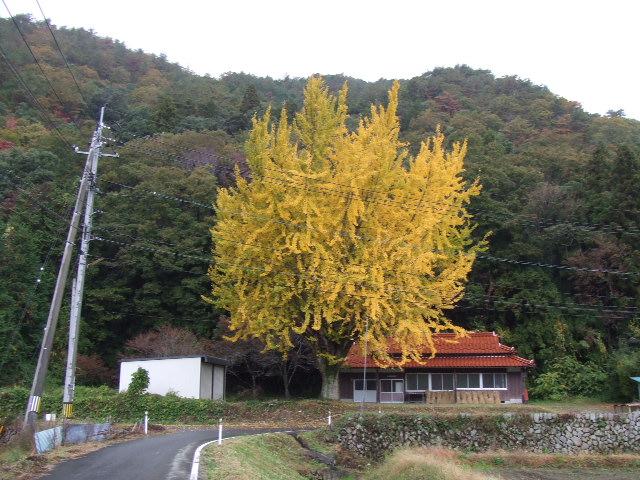 2007_11120073.jpg