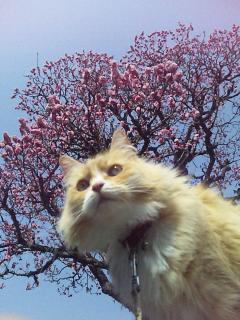 春のあーた