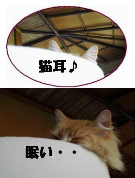 ベッドに猫耳