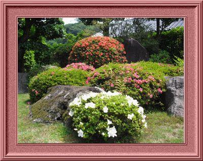 さつきの庭