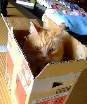 箱にも・・