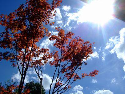 秋みたいな