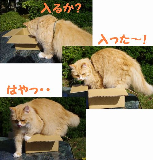 箱にINする?