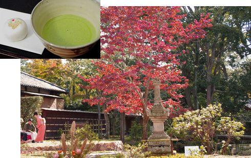 お庭でお抹茶