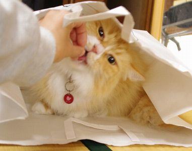 袋でオヤツ♪
