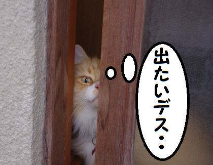 IMGP0951.jpg