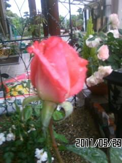 20110524092206.jpg
