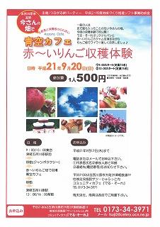 赤いりんご収穫