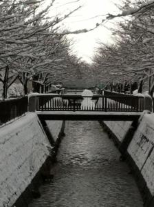 20110110_sagicho_6.jpg