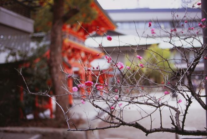 梅 生田神社