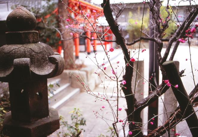 梅 生田人神社2