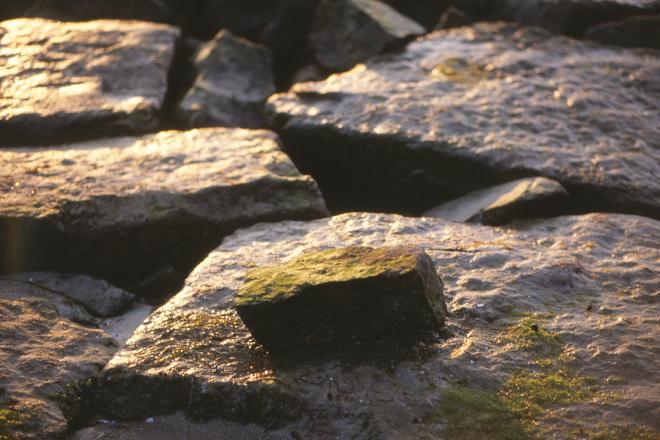 粟島 濡れ岩