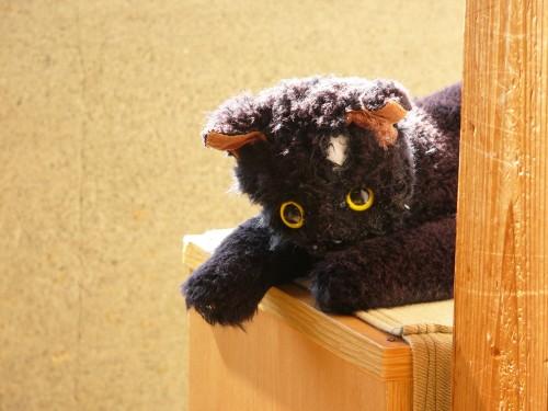 ぼろぼろ黒猫