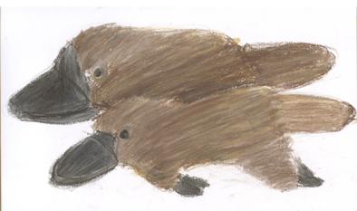 テッちゃんのカモノハシ