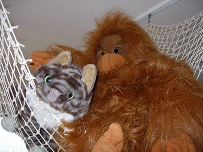 猫とオラウータン