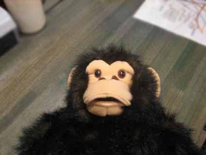 可愛いチンパンジーくん