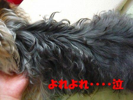 s-2009_0609_103346-P1010035.jpg