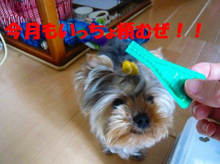 s-2009_0609_103446-P1010036.jpg