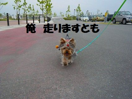 s-2009_0609_145008-P1010058.jpg