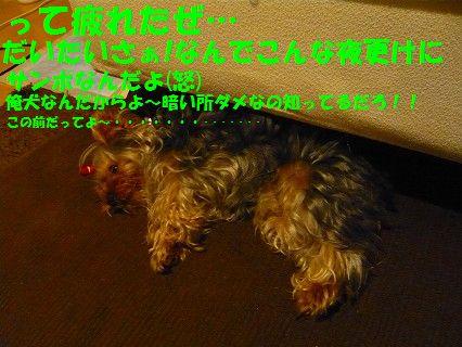 s-2009_0611_010734-P1010095.jpg