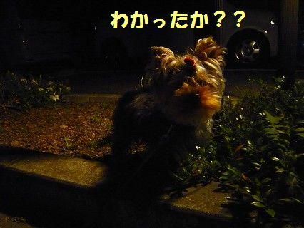 s-2009_0611_231104-P1010107.jpg