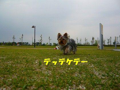 s-2009_0613_172002-P1010126.jpg