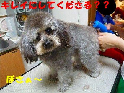 s-2009_0613_213816-P1010143.jpg