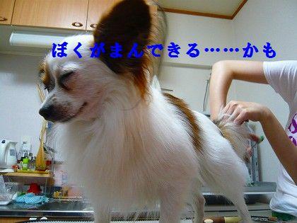 s-2009_0613_225920-P1010144.jpg