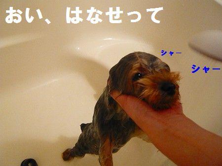 s-2009_0620_210126-P1010226.jpg