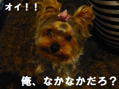 s-2009_0620_222237-P1010248.jpg