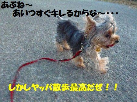 s-2009_0904_182553-P1010785.jpg