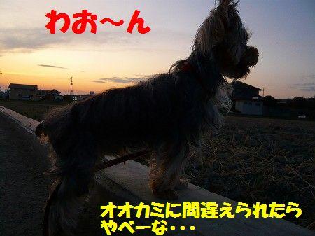 s-2009_0904_183631-P1010787.jpg