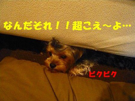 s-2009_0909_215302-P1010887.jpg