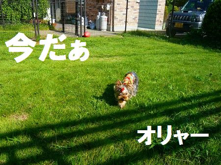 s-P1010348.jpg