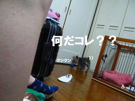 s-P1010507.jpg