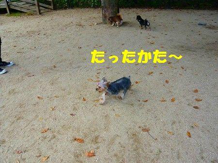 s-s-P1010929.jpg