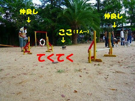 s-s-P1010933.jpg