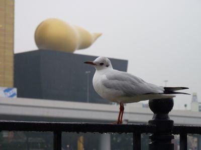 うんこビル鳥1