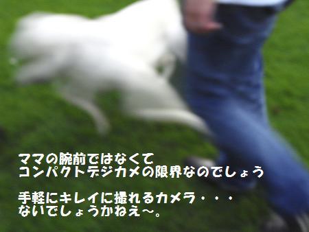 RIMG0022_20081005220249.jpg
